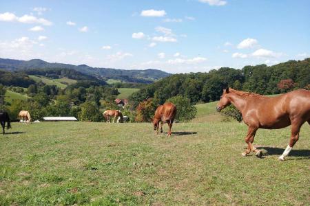 Blick in den Odenwald mit Pferden