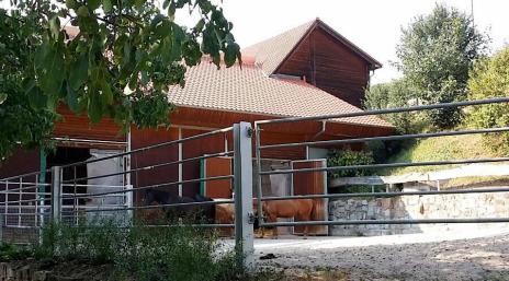 Pferde vor den Stallungen im Gestüt