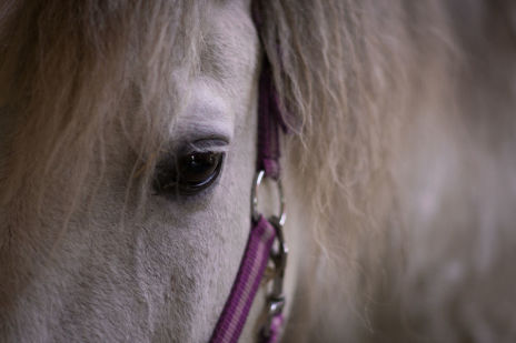 Pferdekopf - Praxis Meininger-Schön