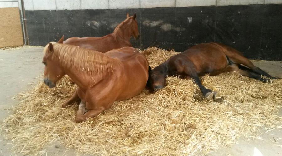 Pferdetherapie Praxis Meininger Schön